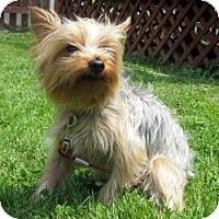 Adopt A Pet :: Hendrix - Sheboygan, WI