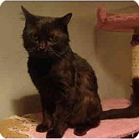 Adopt A Pet :: Don Juan--PETSMART - Muncie, IN