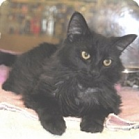 Adopt A Pet :: Magic - Colorado Springs, CO