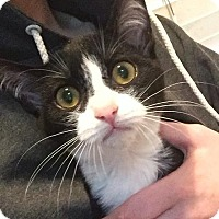 Adopt A Pet :: Everdeen - Modesto, CA
