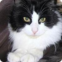 Adopt A Pet :: Rudy - Prescott, AZ