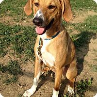 Adopt A Pet :: Mason - Morgantown, WV