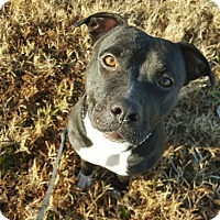 Adopt A Pet :: Pepples - Fort Riley, KS