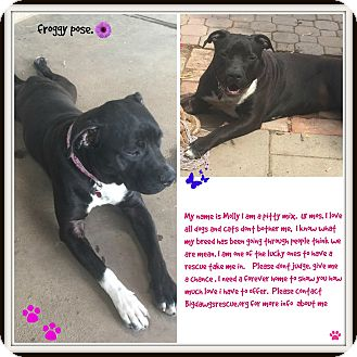 American Pit Bull Terrier Mix Dog for adoption in Livermore, California - Molly