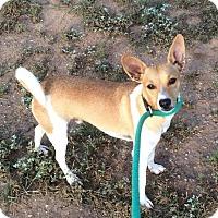 Adopt A Pet :: Flip - Post, TX