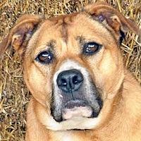 Adopt A Pet :: Jasmine - Renfrew, PA