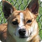 Adopt A Pet :: Lyla