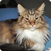 Adopt A Pet :: Izzy Belle - Davis, CA