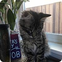Adopt A Pet :: Aladdin - Morgan Hill, CA