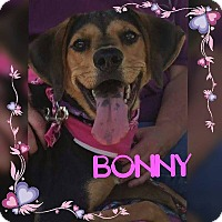 Adopt A Pet :: Bonny - Youngstown, OH