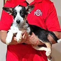Adopt A Pet :: Lu Lu - South Euclid, OH