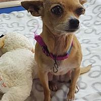 Adopt A Pet :: Plum - Philadelphia, PA