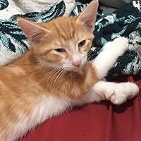 Adopt A Pet :: Dean Hemingway - Rosemead, CA