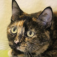 Adopt A Pet :: Baby - Colorado Springs, CO
