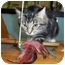 Photo 2 - Domestic Mediumhair Cat for adoption in San Clemente, California - CINDY