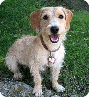 Terrier (Unknown Type, Small) Mix Dog for adoption in Mountain Center, California - Denver