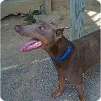 Adopt A Pet :: Jace - New Richmond, OH