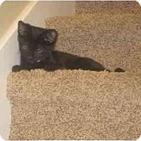 Adopt A Pet :: Diggory - Davis, CA