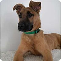 Adopt A Pet :: Carly - Rigaud, QC