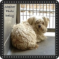 Adopt A Pet :: Daisy - Sheridan, OR