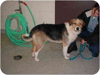 Terrier (Unknown Type, Medium) Mix Dog for adoption in Tracy, California - Madison