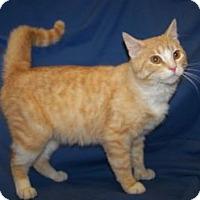 Adopt A Pet :: Buddy - Colorado Springs, CO