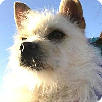Adopt A Pet :: Sadie-ADOPTION PENDING - Boulder, CO