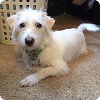 Adopt A Pet :: Tinkerbell - Raritan, NJ