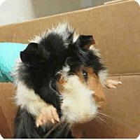 Adopt A Pet :: *Urgent* Candace - Fullerton, CA
