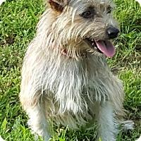 Adopt A Pet :: Margo - Washington, DC
