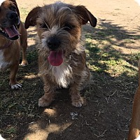 Adopt A Pet :: skehti - Bakersfield, CA