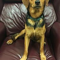 Adopt A Pet :: Rainbow - Richmond, VA