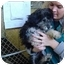 Photo 2 - Bichon Frise/Poodle (Miniature) Mix Puppy for adoption in Cincinnati, Ohio - Camry