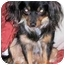 Photo 2 - Papillon/Dachshund Mix Dog for adoption in San Clemente, California - Priscilla
