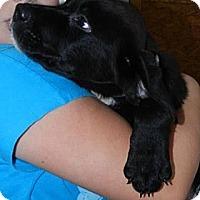 Adopt A Pet :: Kalie - Clinton, ME