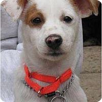 Adopt A Pet :: Maddie - Warren, NJ