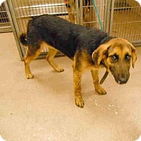 Adopt A Pet :: need foster homes ASAP - Sacramento, CA