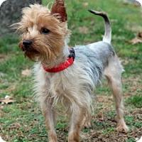 Adopt A Pet :: Louie - Port Washington, NY