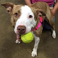 Adopt A Pet :: Niya - Medina, OH