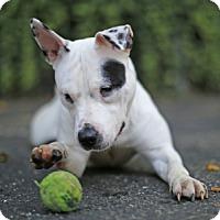 Adopt A Pet :: Farina - Port Washington, NY