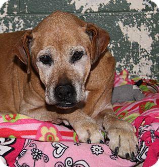 Labrador Retriever/Boxer Mix Dog for adoption in Marietta, Ohio - Fannie Mae