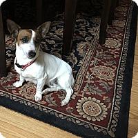 Adopt A Pet :: Rosie - Hazard, KY