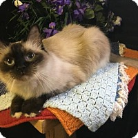Adopt A Pet :: Teddy - Fayetteville, GA