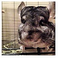 Adopt A Pet :: Hugo - Granby, CT