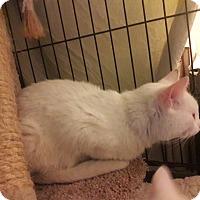 Adopt A Pet :: Simone - Alamo, CA