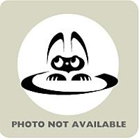 Adopt A Pet :: BellaDonna - Menands, NY