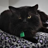 Adopt A Pet :: Agent K - Venice, FL