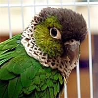 Adopt A Pet :: Parker - Elizabeth, CO