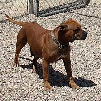 Adopt A Pet :: Elly Mae - Clear Lake, IA