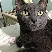 Adopt A Pet :: Slate - Miami, FL